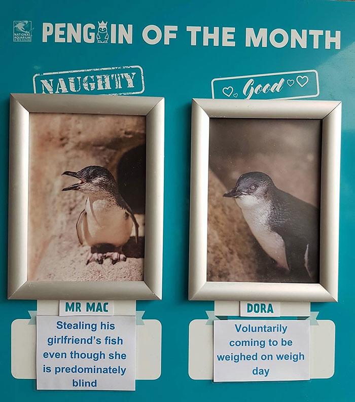 水族馆帮企鹅做「月度评鉴」 最糟糕企鹅罪行网笑出声:企鹅界八点档~
