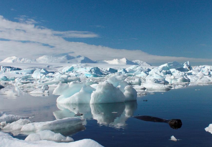 北極竟然出現超級細菌,研究預估將來會有1千萬人因而喪命!