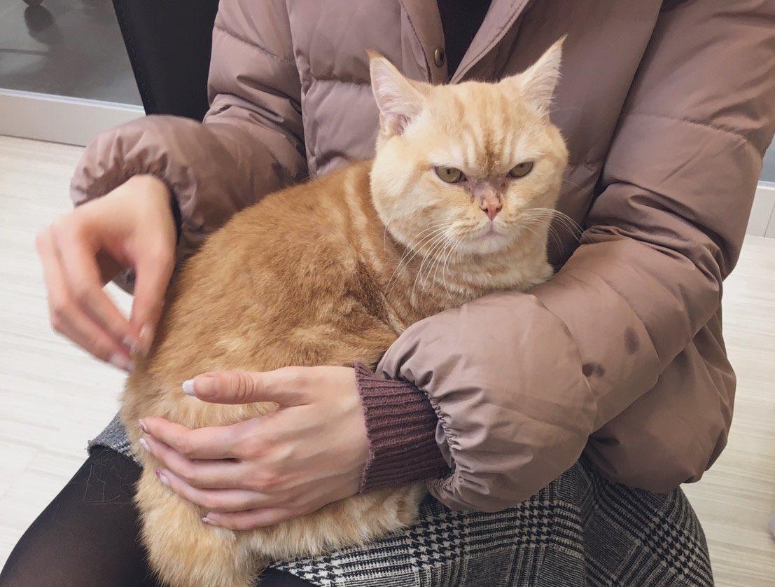臭脸橘猫刚来超厌世! 主人1年用爱融化「自开滤镜」变绝世美猫