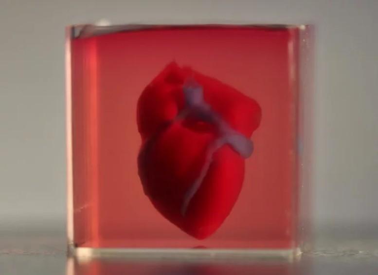 未來的人類有救了!全球第一顆3D打印人工心臟出現了!