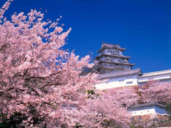 日本教育之所以那麼成功背後的原因,父母可以學起來!