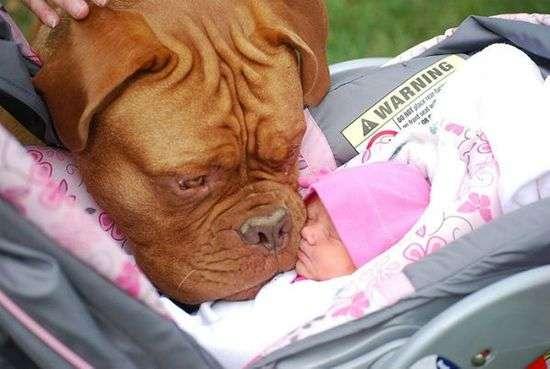 Resultado de imagen para 犬 Dogue de Bordeaux 抱擁